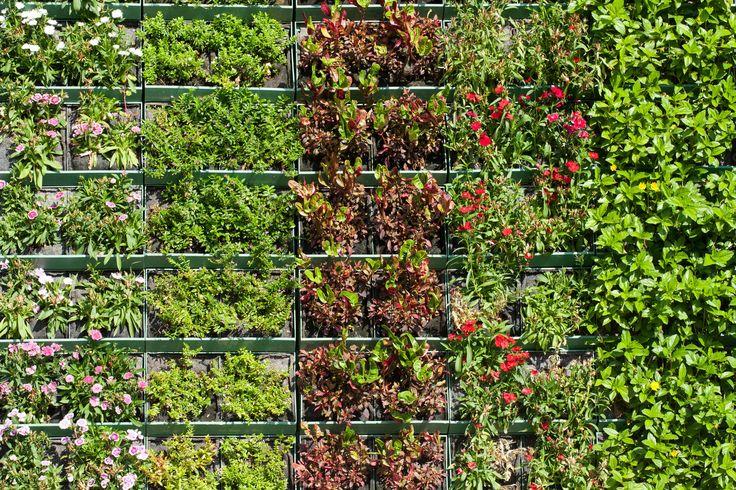 Weinig plaats in huis voor planten? Bekleed eens een muur met groen. Zo'n verticale tuin zie je steeds meer. Laat je inspireren door onze voorbeelden.