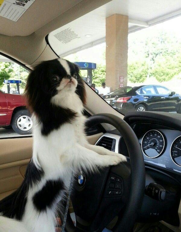 Skeeter getting gas