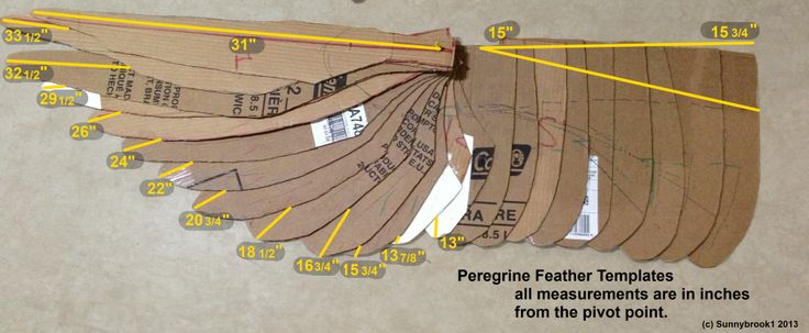 Peregrine Feather Template Lengths by Sunnybrook1 on deviantART