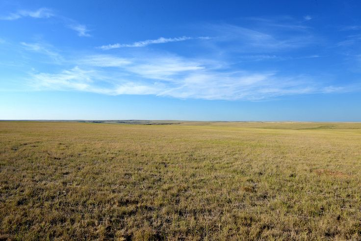 The shortgrass prairie of western Kansas is dominated by two species of grass-: buffalo-grass (Buchloe dactyloides) and tall grama (Bouteloua oligostachya). This grassland rarely reaches over two to three inches in height.