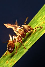 How to get rid of ants naturally. Love it