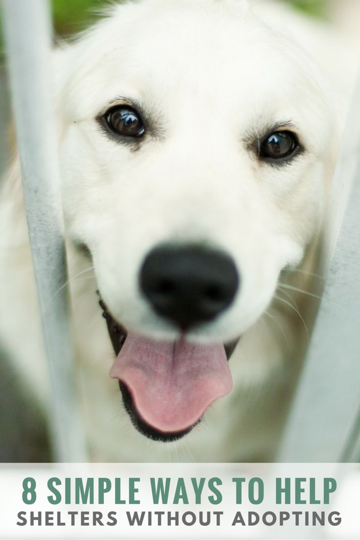 57 best help animals u003c3 images on pinterest animal rescue