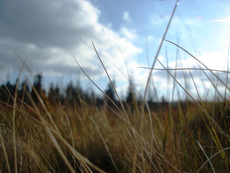 oblaka v trávě