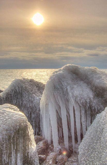 Walrus | Flickr - Photo Sharing!