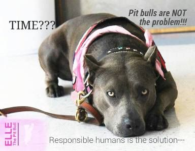"""According to a biased Time magazine article using unreliable resources, Pit Bulls are """"bred to be violent."""" A whole lot of people disagree."""
