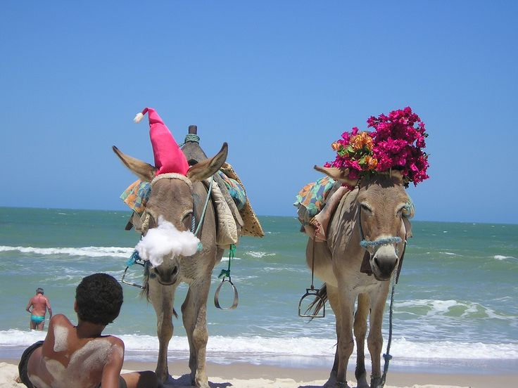 even the burro celebrate christmas in brazil - Christmas Traditions In Brazil