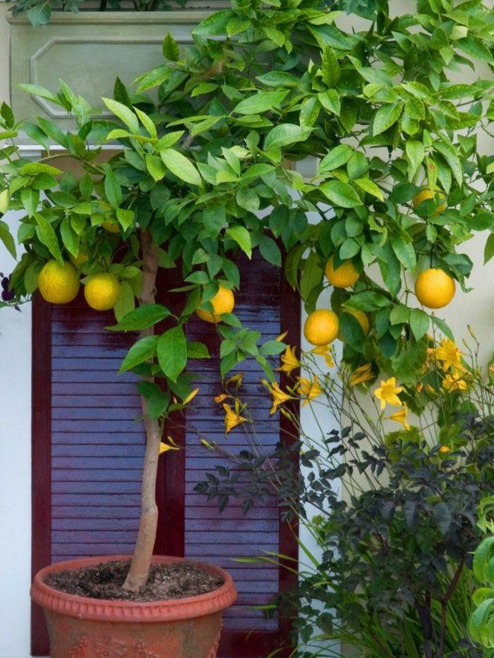 Die besten 25+ Zitronenbaumpflanzen Ideen auf Pinterest - tipps pflege pflanzen wintergarten