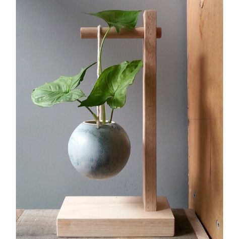 Vase with plant-different – #burning #plantadifere …