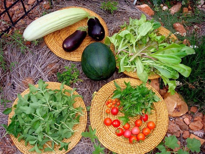 Benefits of Using Organic Gardening Practices, create the harvests that taste better, Garden Tips Designs, Protected and solid harvests
