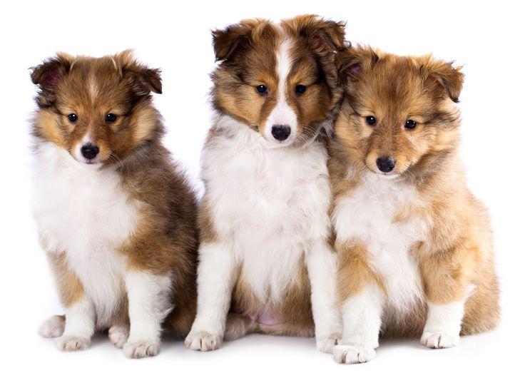 101 Boy Puppy Names