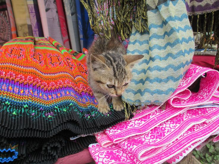Adorable kitten in the Hmong village outside of Sapa, Vietnam. #meowmonday #cute #cats #kittens #vietnam #travel