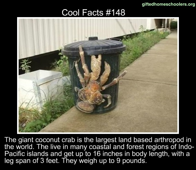 Pin by ~francy~ on What the heck | Coconut crab, Funny ...