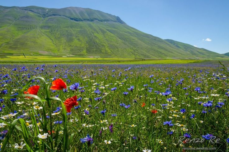 © Castelluccio Flowers http://www.photoone.org/editors-award-honorable/editor-award-honorable-march-2014-2-14213.html/attachment/14-03-2014-photo-by-renzo-re Photo One - EDITOR'S CHOICE AWARD- HONORABLE MENTION Renzo Re - PHOTOGRAHY © http://renzore.weebly.com