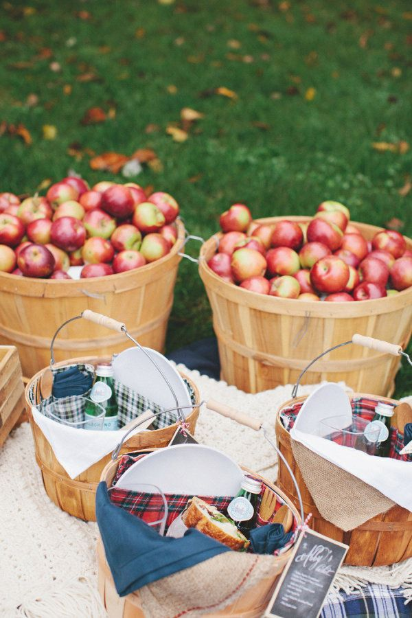 a picnic built around apple picking  Photography by rebeccahansenweddings.com