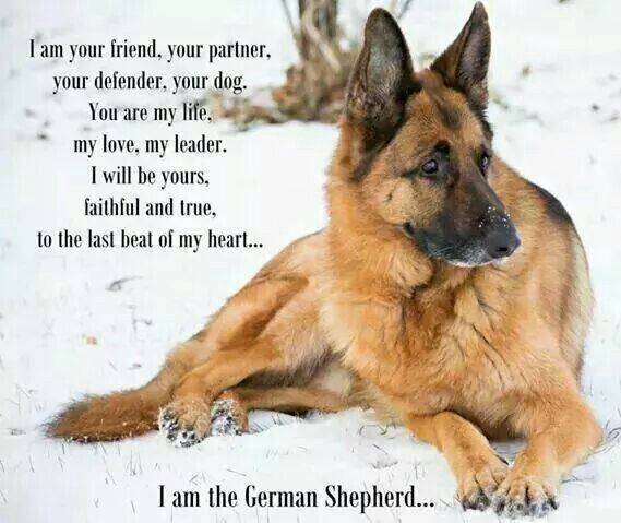 Most Loyal Dogs Ever <3 Definitely describes Our Rodman (aka Manny Man) <3