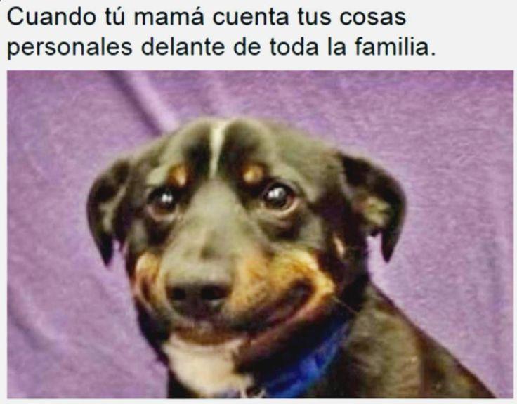 Disfruta y ríe con zlatan memes, suporte ao cliente itaucard, memes el conjuro, memes en español de risa y gif amor bbm. ➣➢➣ http://www.diverint.com/memes-divertidos-para-facebook-asi-suelen-ser-la-mayoria-de-mis-despertares/
