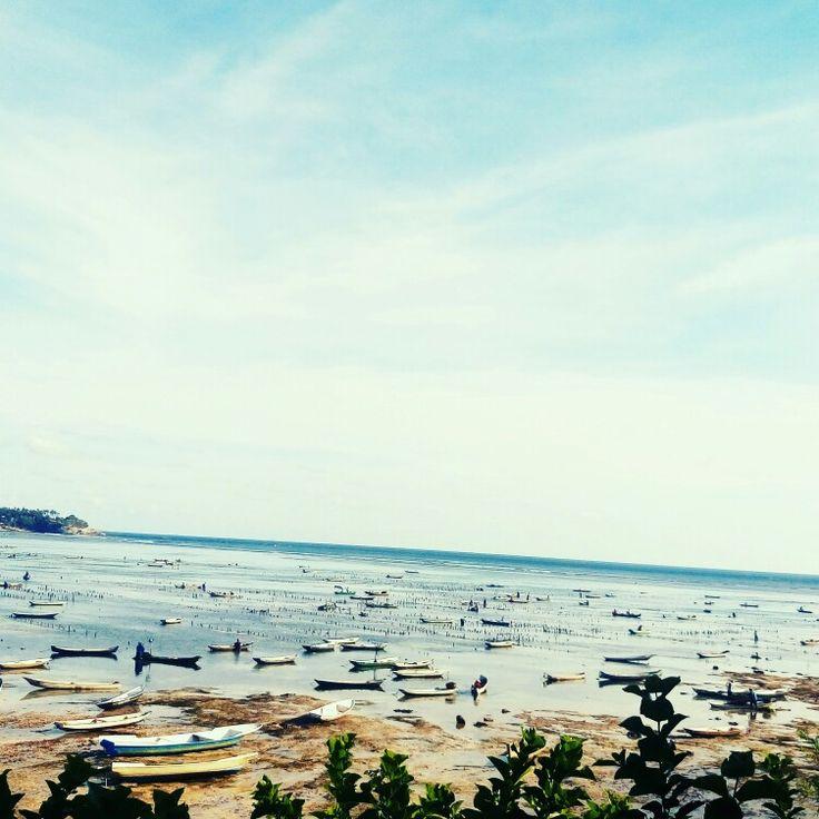 Seaweeds fam lembongan Island bali Indonesia
