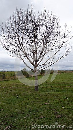 Tree without leaves on green grass