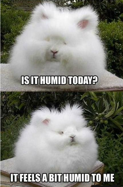 Exactly how I felt when I went to Mexico... As soon as I left the hotel room, frizz...