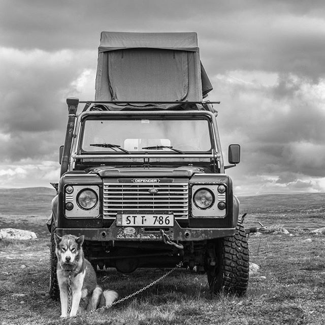Greenland dog, land rover and a rooftop tent.