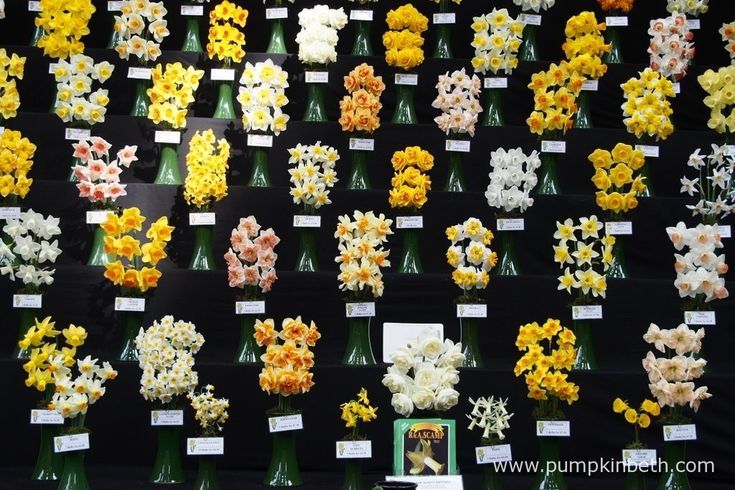 Ron Scamp Quality Daffodils of Cornwall created this incredible, Gold Medal winning daffodil exhibit for the RHS London Spring Plant Extravaganza 2016.