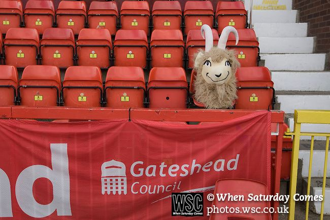 Gateshead 1 Cambridge United 1, 17/09/2011. Gateshead International Stadium, Football Conference. The head of the home team's mascot resting on a seat in the main stand at the Gateshead International Stadium, the athletics stadium which is also the home ground of Gateshead FC, on the day the club played host to Cambridge United in a Blue Square Bet Premier division fixture. The match ended in a one-all draw, watched by a crowd of 904. The point meant Gateshead went to the top of the…