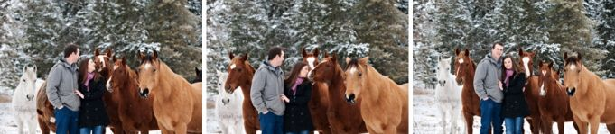 Herd of Quarter Horses in the snow. Palamino horse. Engagement Session Photography by Robyn Mumford of Robyn Louise Photography in Quesnel, BC.  Cariboo, Quesnel, Williams Lake, BC and beyond equine and wedding photographer. www.robynlouise.com #quarter #horse #bucksin #engagement #winter #snow #horses #sorrel