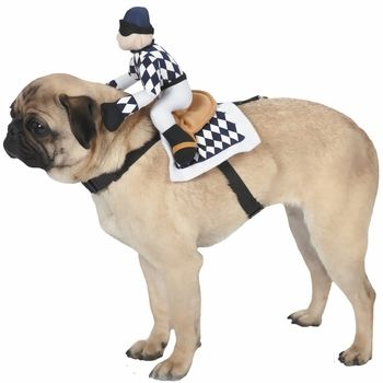 Zack & Zoey Show Jockey Saddle Costume is a simple and comfortable costume that turns your dog into the life of the party. This hilarious harness features a tiny jockey that sits atop your pet's back to inspire big laughs and appreciative nods from anyone who sees it. #dogs