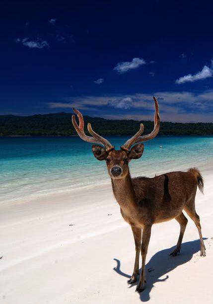 peucang island - Indonesia