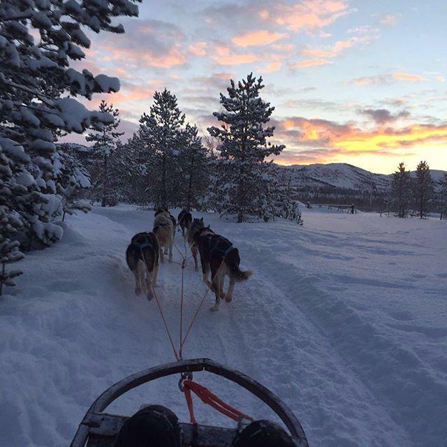 Já pensou em andar de trenó puxado por cachorros? Na #Noruega isso é um passeio! #norway #noruega #vacation #atualidades #anacomsorte