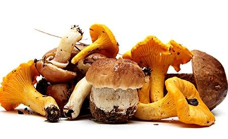 Zwei Dinge haben unsere heimischen #Pilze gemeinsam: Sie schmecken lecker und sind sehr gesund! -> https://www.zentrum-der-gesundheit.de/pilze.html #gesundheit