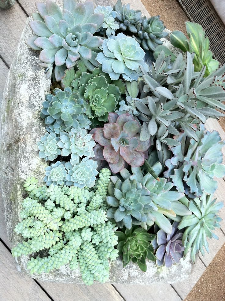 1000 Images About My Dream Succulent Garden On Pinterest