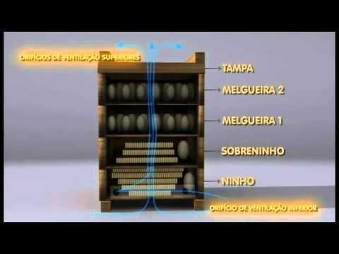 Meliponicultura - Embrapa Amazônia Oriental - YouTube