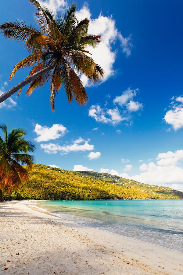 St Thomas Map Virgin Islands%0A Palm Trees Of Magens Bay Canvas Print   Canvas Art by George Oze