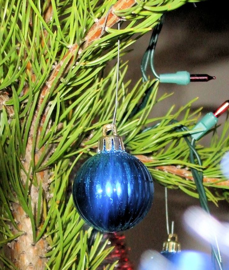 """Christmas Ornaments 3:  Small blue ribbed Christmas ball hanging on a tree. Christmas ornaments, Xmas, Christmas decorations, Christmas ball.  Image size 825 x 975px; prints at 2.75 x 3.25""""."""