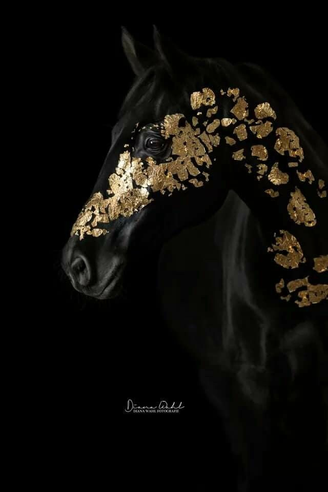 This horse is beautiful