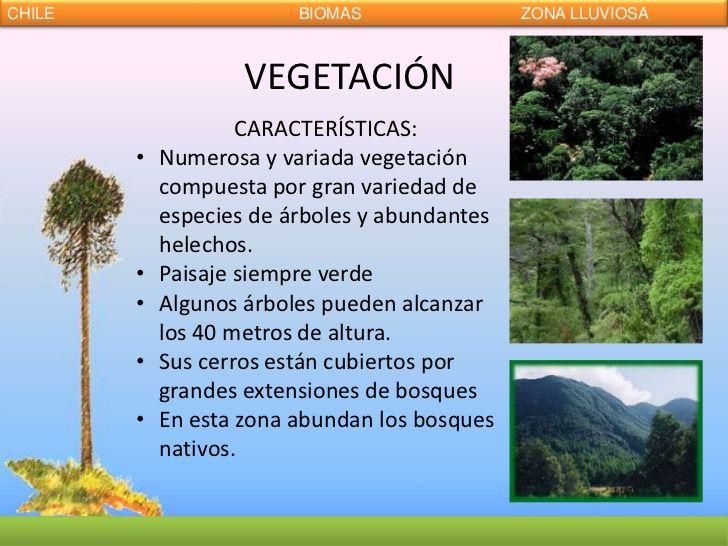 Resultado de imagen para vegetacion zona sur roble