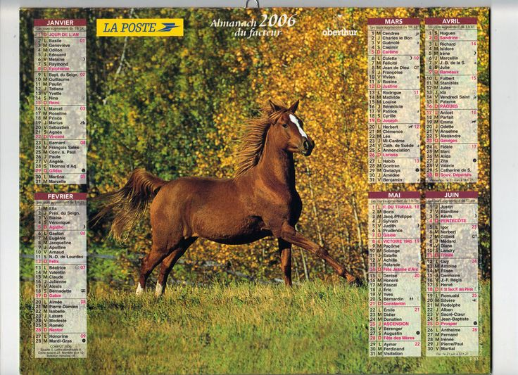 CALENDRIER, ALMANACH PTT - ANNEE 2006 - CHEVAL ANGLO ARABE