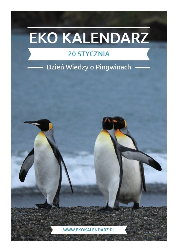 Dzień Wiedzy o Pingwinach – Day of knowledge about penguins - January 20.