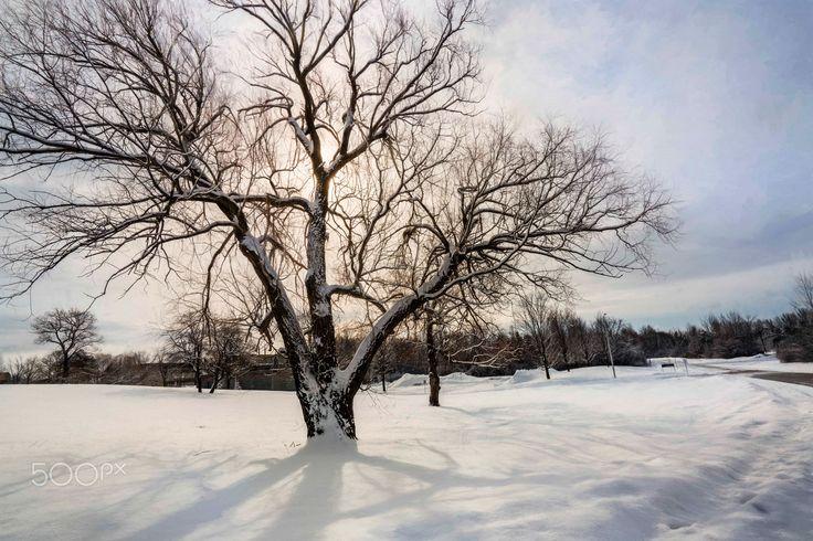 Spring? - Ottawa, Ontario, Canada, North America