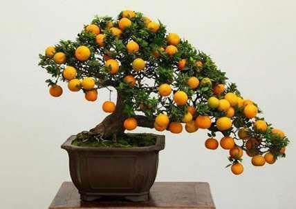 orange-bons.jpg (428×303)