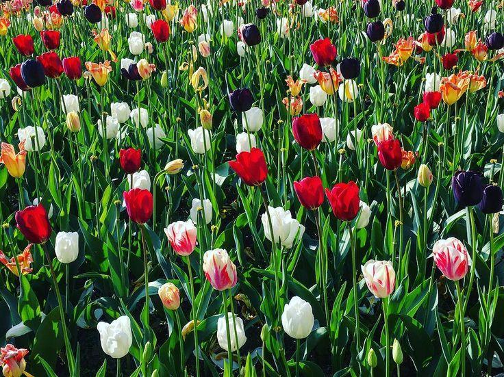 Le bonheur est parfois caché dans l'inconnu  Victor Hugo #bruxelles #brussels #bruxellesmabelle #bxl #bx #bxlove #bybrussels #bruxellestagram #bruxellesjetaime #bxl_online #visitbrussels #igbrussels #bxlcult #belgique #belgium #welovebrussels #brusselslove #sunday #sun #flowers #color #spring #goodvibes #flowers #flower #botanical #petals #flowerporn #insta_pick_blossom