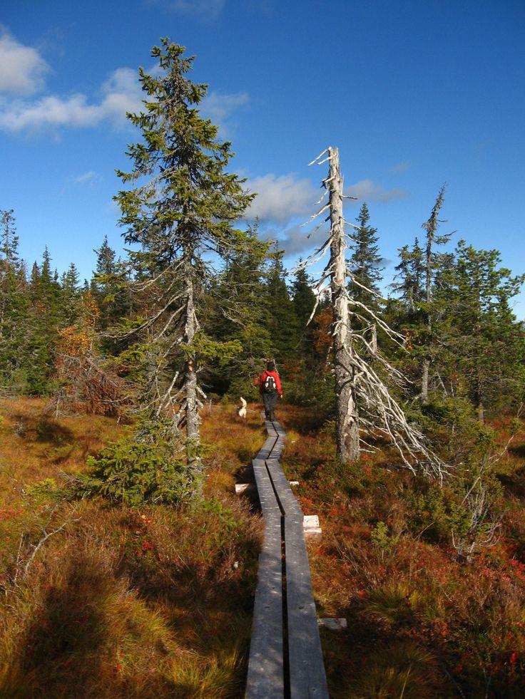 Hiking trail Simosenpolku in Jokijärvi, Taivalkoski, Lapland, Finland www.saija.fi