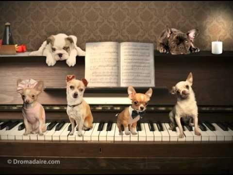 """Carte d'anniversaire Dromadaire : """"Un anniversaire en musique"""" - YouTube"""