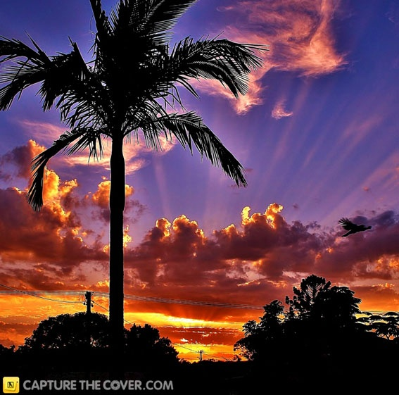 Beenleigh palm tree #CaptureTheCover entry - by Cheryl in Brisbane's Logan City, Beenleigh Region. Click to enter your photos!