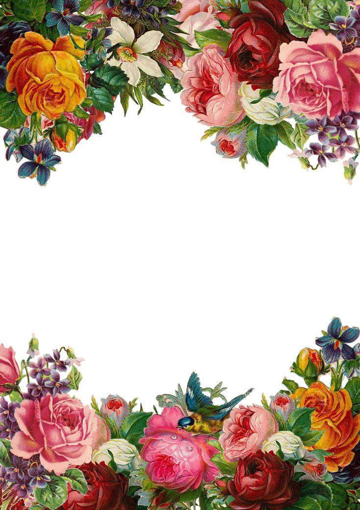 Цветок, Роуз, Кадр, Сбор, Сбор Винограда, Композиция