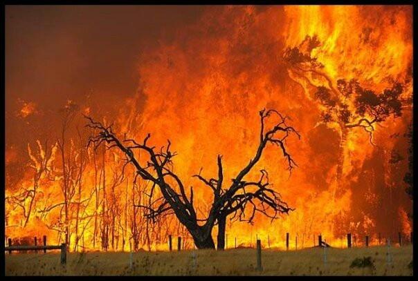 Bushfires - a reality of the Australian bush