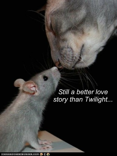 Can and mouse - a better love story than Twilight.     pinned by www.affordablecomp.net