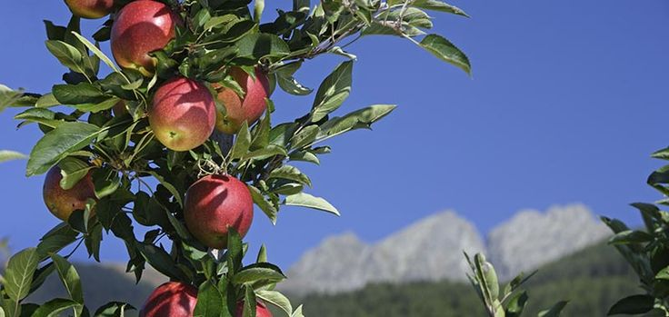 Lana ist als Südtirols größte Apfelgemeinde nicht nur in Sachen Agrikultur eine große Nummer, sondern auch in Sachen Kulturleben: Die Passionsspiele, die LanaPhil, die Freilichtspiele und die Literaturtage sind im Sommer 2016Weiterlesen...