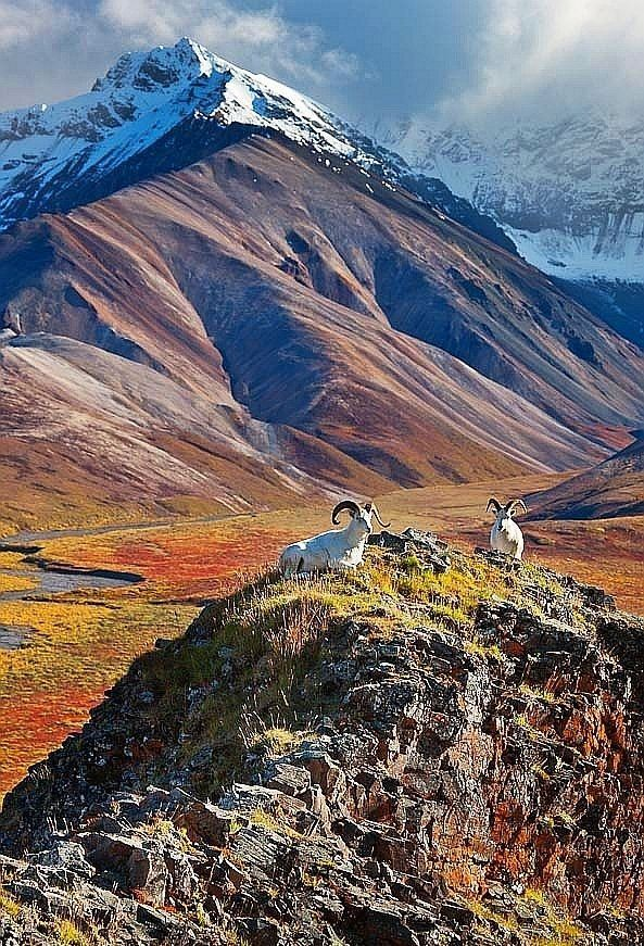 Autumn, Denali National Park, Alaska. This looks absolutely incredible! Almost like a painting!